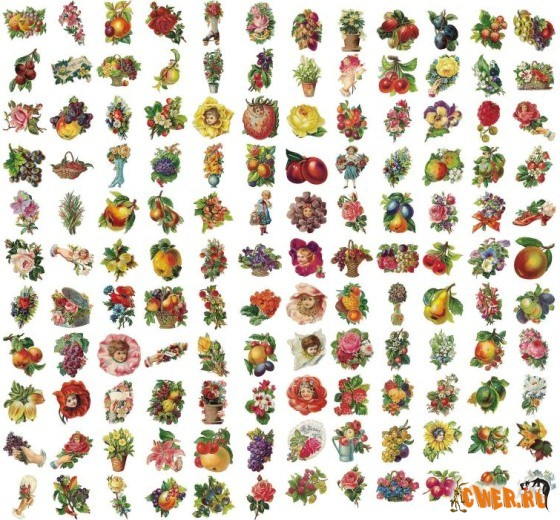 Dover - Color Fruits and Flowers Illustrations