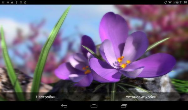 Nature Live: Spring Flowers XL