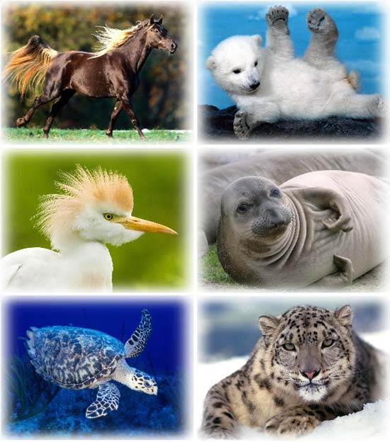 Amazing Animals Wallpapers